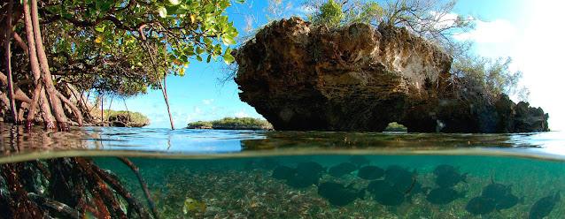 El atolón de Aldabra en las islas Seychelles hace parte del Patrimonio Mundial de la UNESCO.  UNESCO/FotoNatura