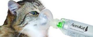 kucing sulit bernafas