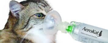 pengertian Nebulize kucing