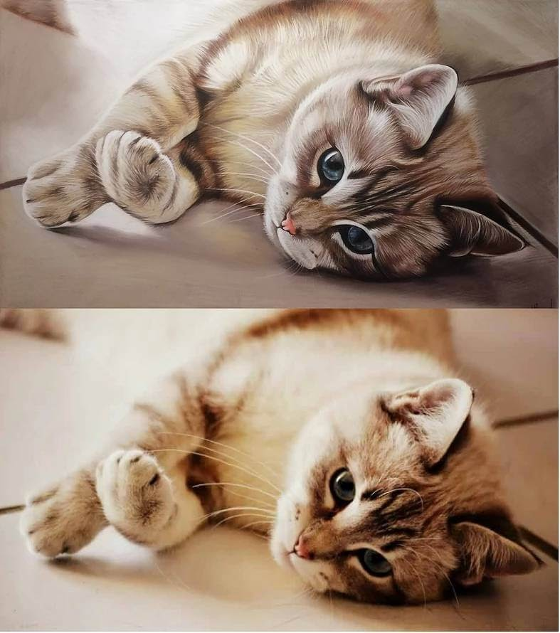14-Drawing-vs-Photo-Cat-Virginie-Agniel-Pastel-Drawings-of-Cats-and-Dogs-www-designstack-co
