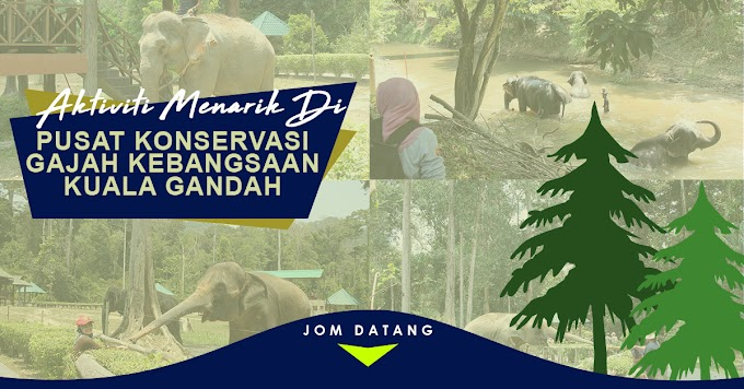 Aktiviti Menarik Di Pusat Konservasi Gajah Kebangsaan Kuala Gandah, Lanchang Pahang