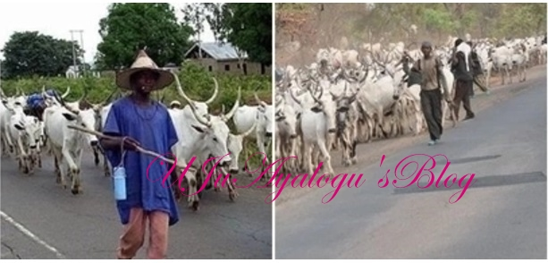 Vacate middle belt region before October 1 or there will be war - Middle belt youths tell herdsmen