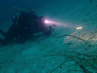 2021年7月12日の柏島ダイビング