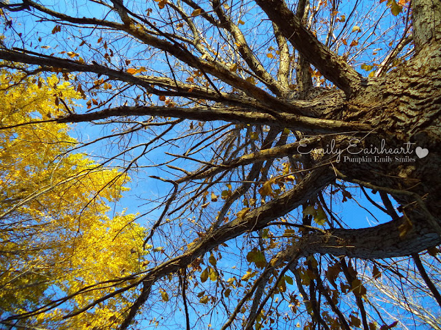 Yellow leaves on a tree.