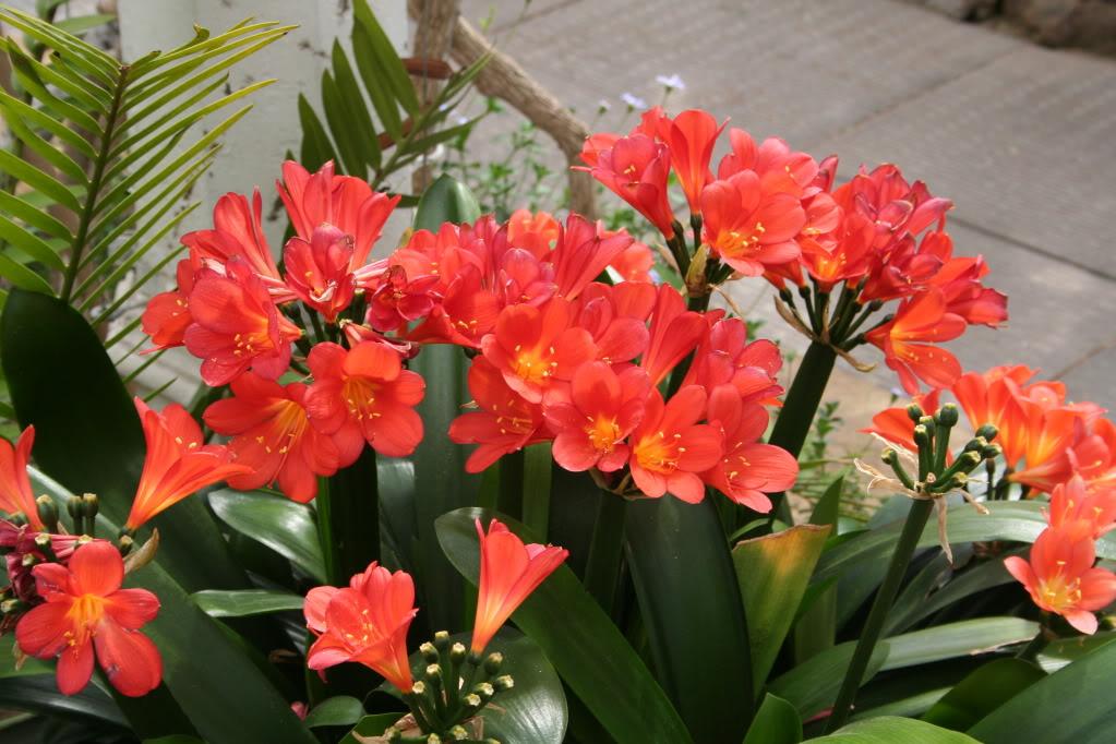 cvijeće-ukrasno-bilje