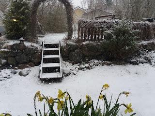 narsissit ja lunta