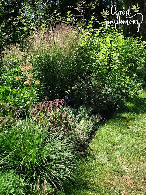 ogród przydomowy, ogród Kasi i Andrew Bellingham