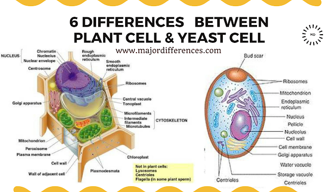 Difference between Plant cell and Yeast cell