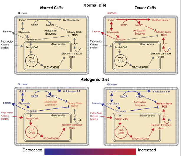 dieta metabolica contra el cancer