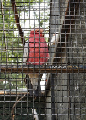 Cook Park Orange NSW