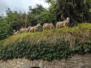 Goats along Via Marieni.