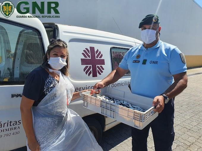 Apreendidos 257 quilos de sardinha na Figueira da Foz