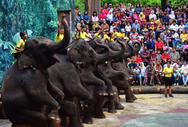 Pertunjukan Gajah di Taman Safari Prigen