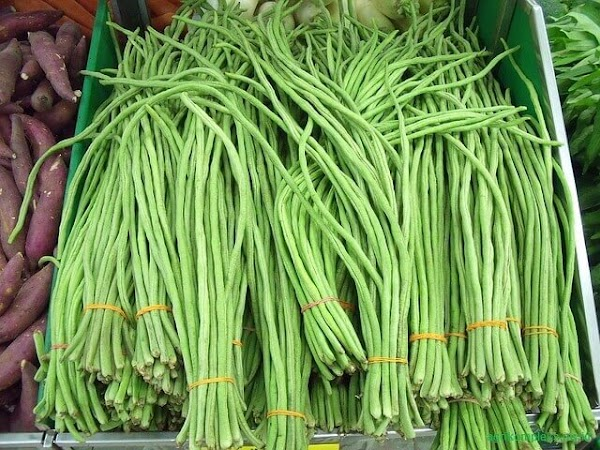 Cara Budidaya Sayuran Kacang Panjang