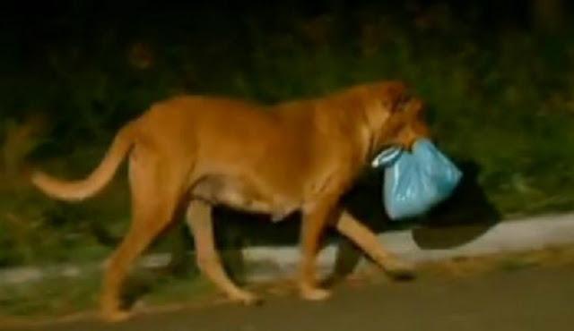 Собака пропадала каждую ночь. Хозяйка проследила за ней и… поняла, что это не собака!
