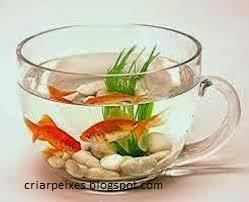 Criar Peixes  pode atrair Sorte Sengundo Feng Shui.