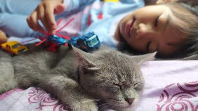 Obat untuk kucing