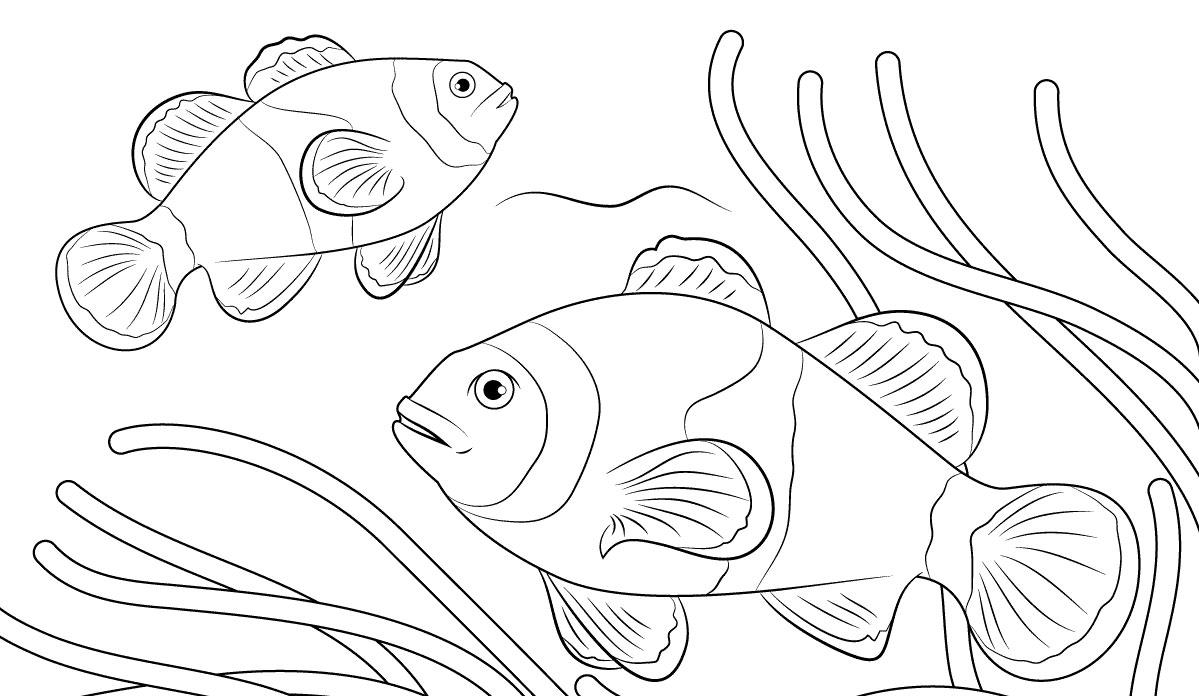 Cara Mewarnai Hewan Laut