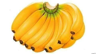 Manfaat pemberian pisang pada ayam bangkok aduan