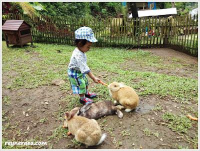 wisata taman kelinci di trawas