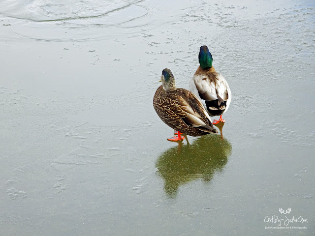 Ducks On Ice Photography Print