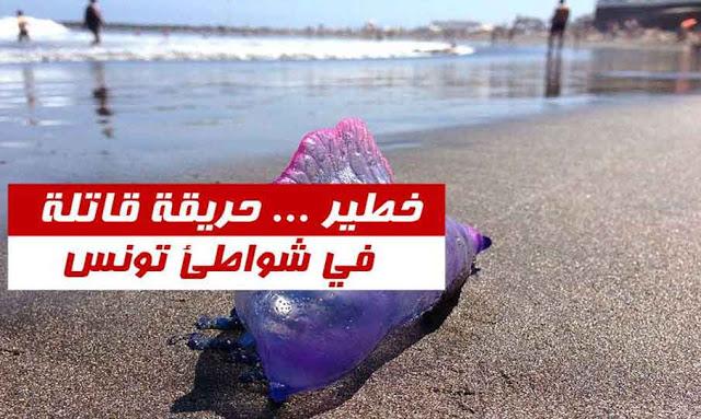 """تونس: تحذيرات من """"حريقة"""" قاتلة تسللت الى الشواطئ التونسية.. (التفاصيل)"""