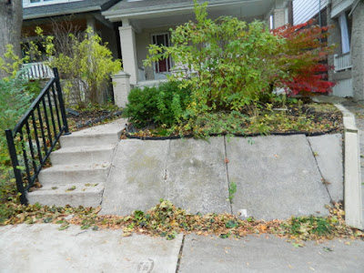 Toronto Beach Hill Fall Cleanup Before by Paul Jung Gardening Services--a Toronto Organic Gardening Company