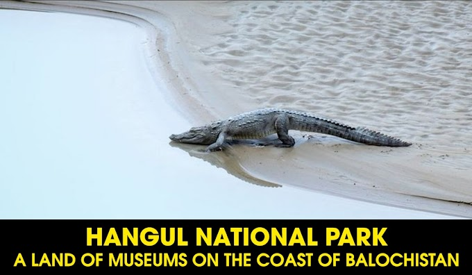 Hangul National Park: A Land of Museums On The Coast Of Balochistan