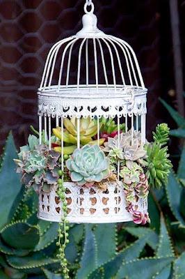 Suculentas pendentes na decoração
