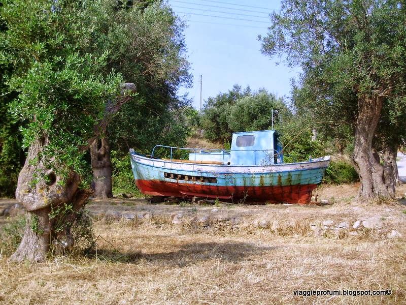 Uliveto a mathraki, isole Diapontie