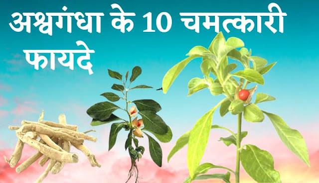 Top 10 benefits of ashwagandha powder and capsule in hindi, ashwagandha ke fayde