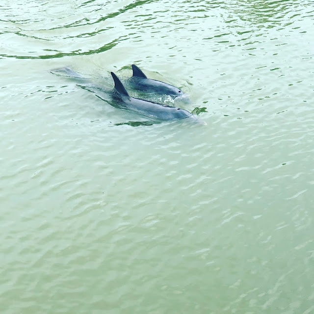 Dolphins at Lovers Key State Park