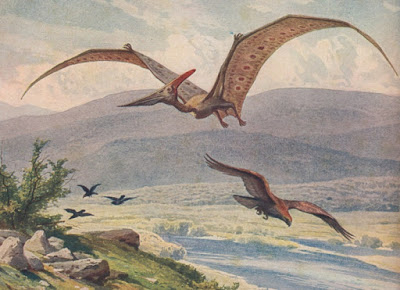 You're Doing It Wrong: Pteranodon Bills