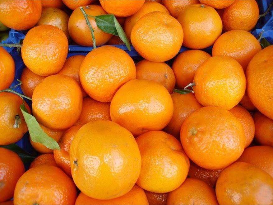 Amefurashi Bibit Benih Seeds Buah Jeruk Santang Manis Banjarmasin