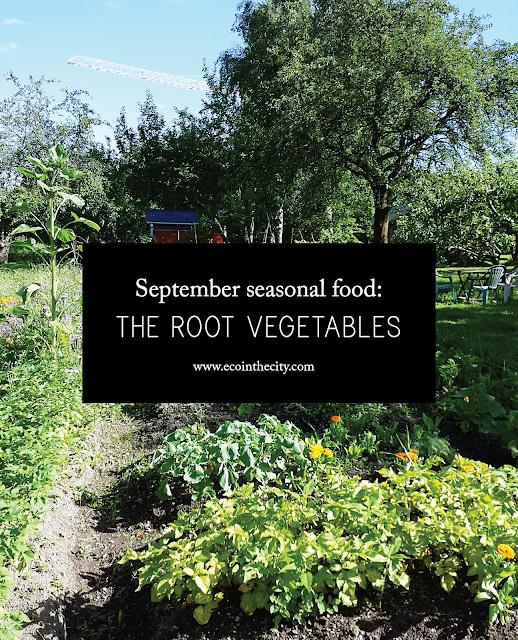 September seasonal food - the root vegetables