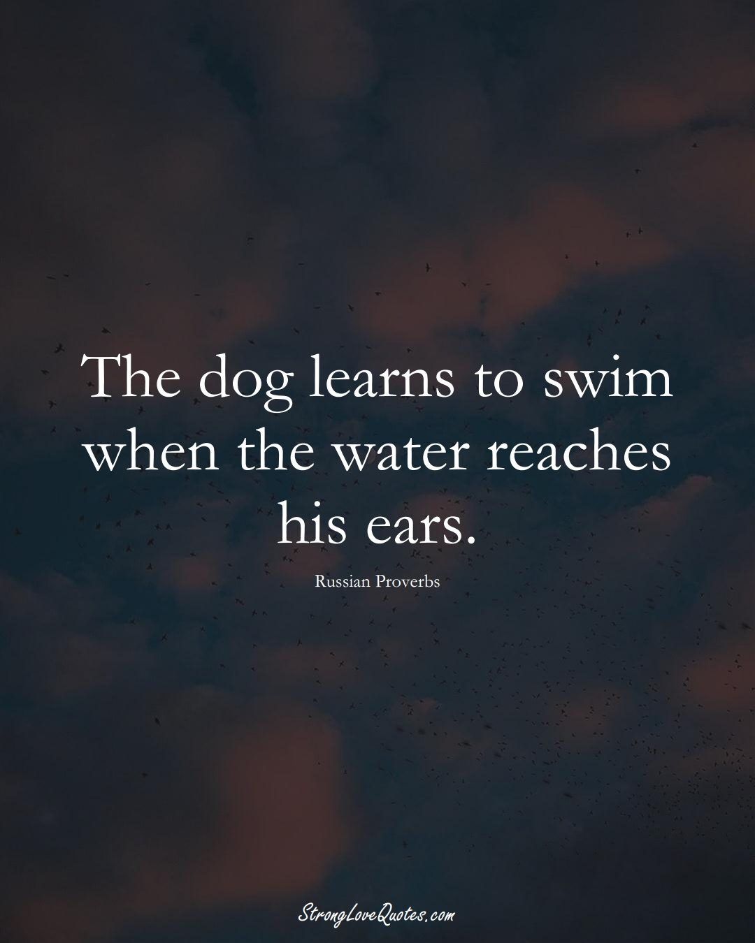 The dog learns to swim when the water reaches his ears. (Russian Sayings);  #AsianSayings