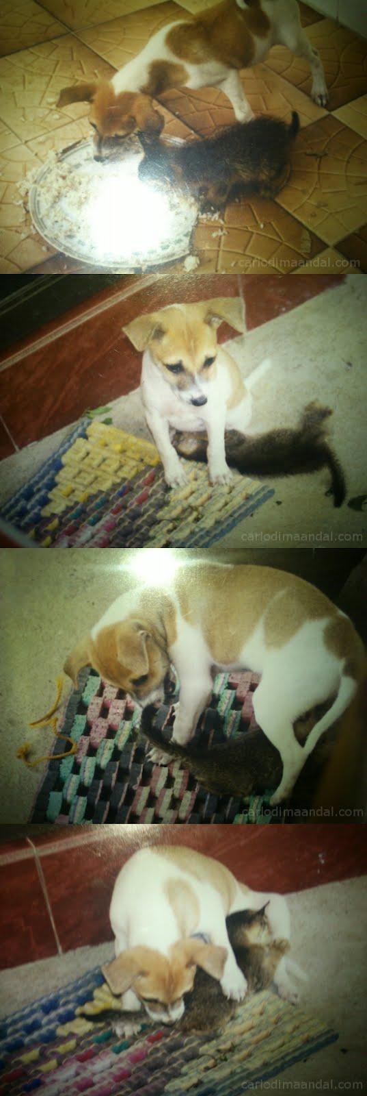 Dog and cat lovin
