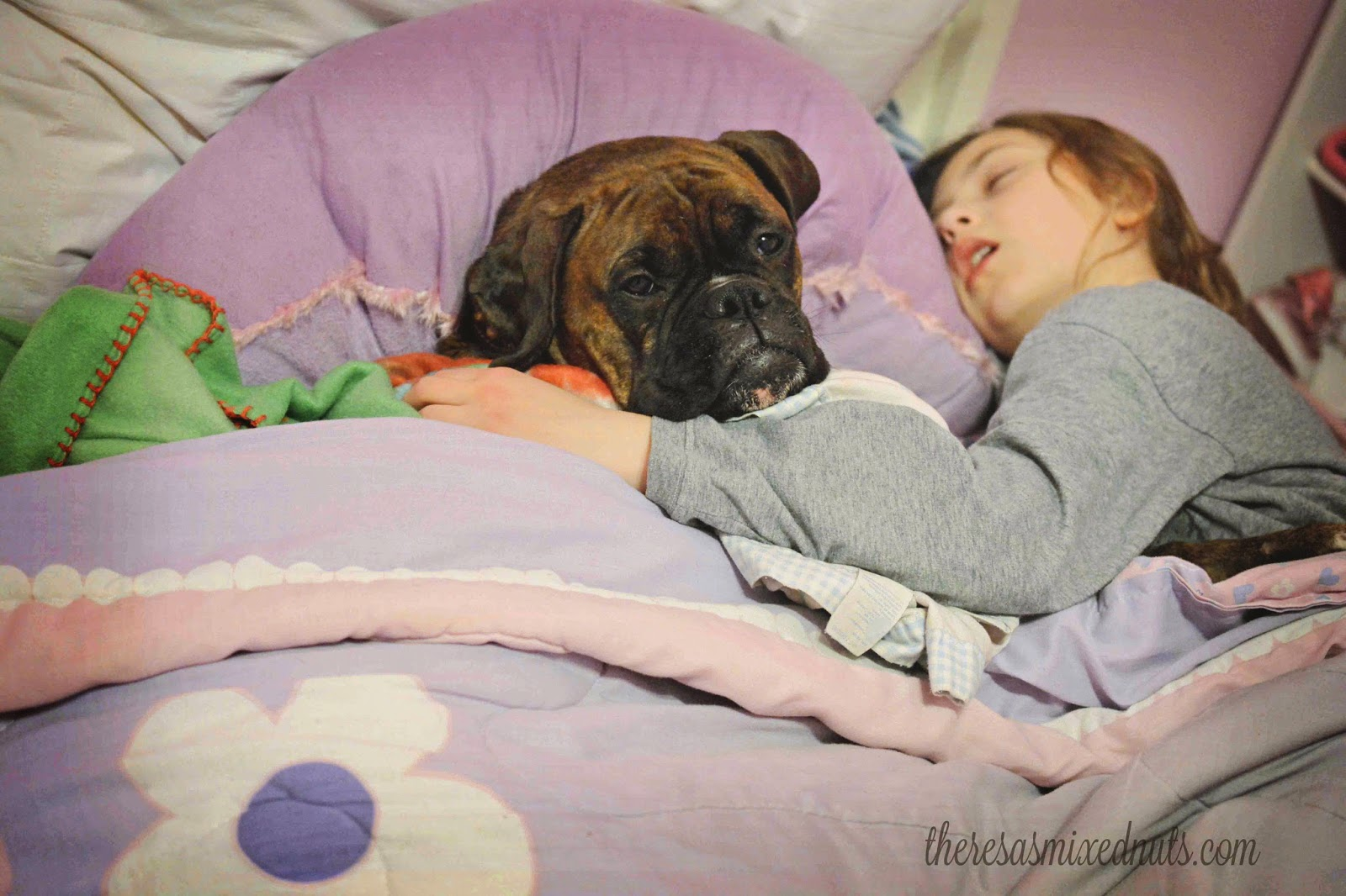 boxer bed