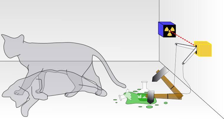 schrodinger cat in hindi