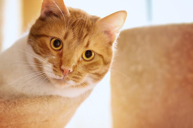gatto-talpe-giardino-rimedi naturali