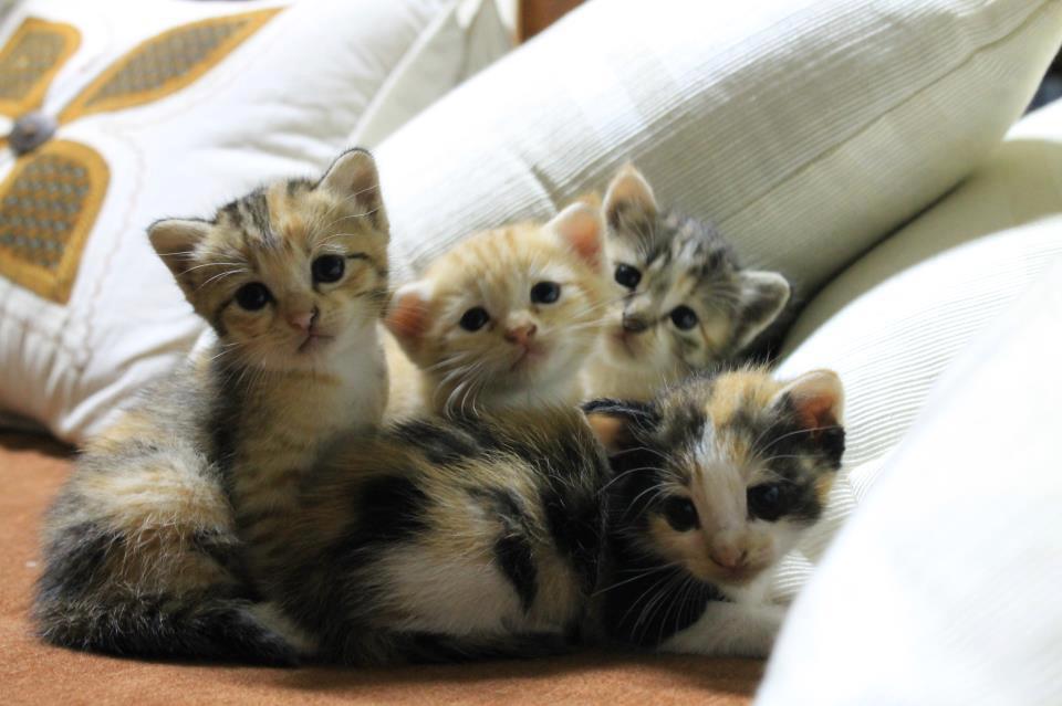 Gambar Kucing Gambar Kucing godean.web.id