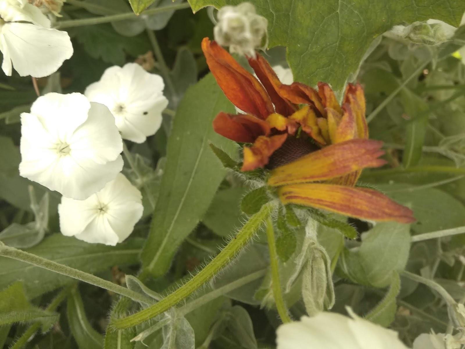 Fiori Da Piantare Nell Orto fiori e fili di iaia: cosa succede nell'orto