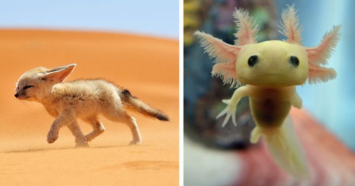 10 Rare Animal Babies You've Probably Never Seen Before