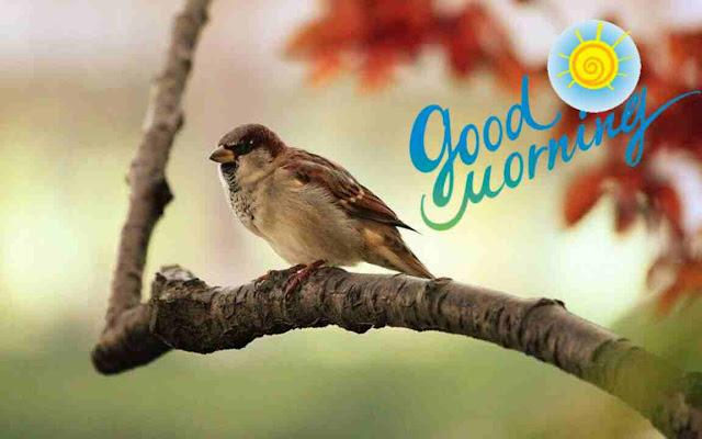 beautiful good morning image of cute sparrow bird