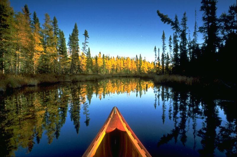 Wilderness Homesteading - Living in the Great North BLOG ...