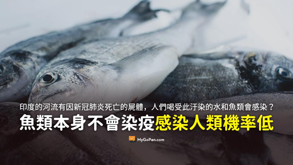 印度的大劇毒 海面 新冠肺炎 屍體 污染 海鮮 感染 地球 魚