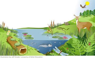 25 Contoh Ekosistem Alami Dan Buatan Beserta Gambar Hedi Sasrawan