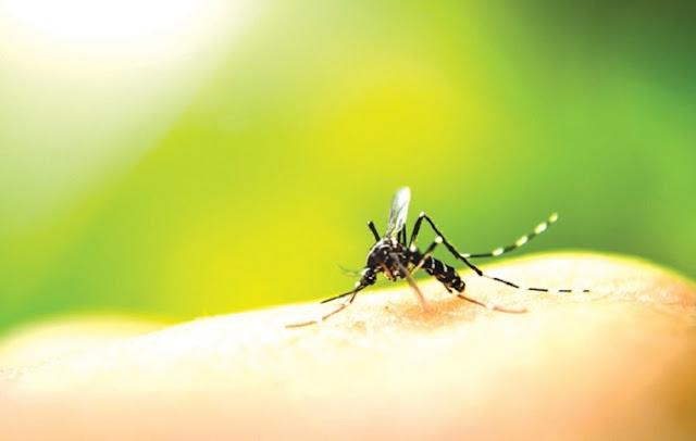 Στους 10 οι νεκροί από τον ιό του Δυτικού Νείλου
