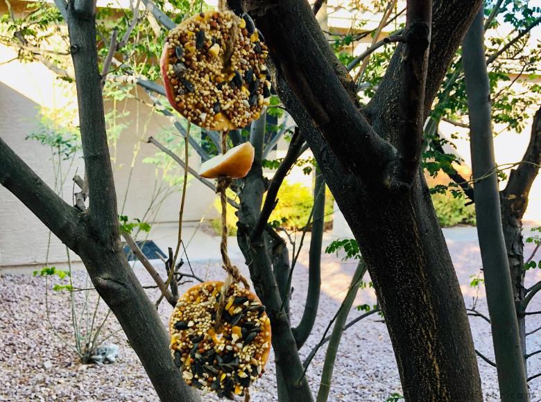 easy homemade bird feeder