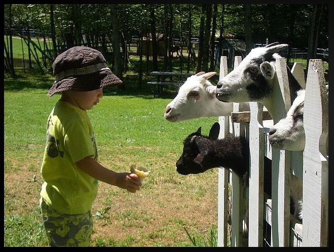 The Daily Rant: The Men Who Stare At Goats
